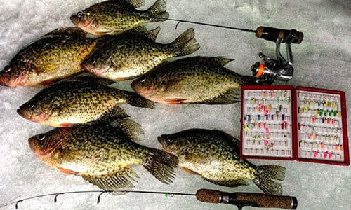 5 Best Ice Fishing Lures
