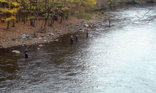 Salmon River New York salmon fishing
